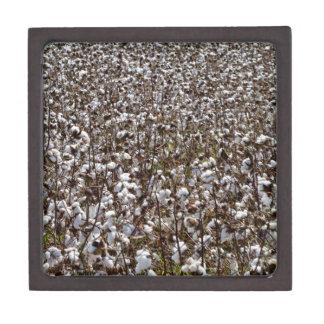 Cotton Crops Field Jewelry Box