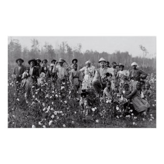 COTTON FARMER and PICKERS in MISSISSIPPI  1908 Poster