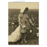 Cotton Field Greeting Cards