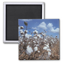 Cotton Field Magnet