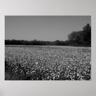 Cotton Field - Murfreesboro, Tennessee Print