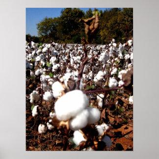 Cotton Field - Murfreesboro, Tennessee Poster