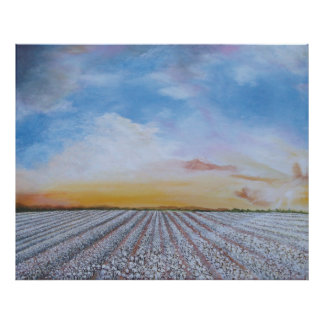 Cotton Field Sunset Poster