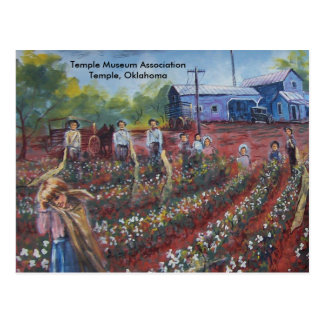 Cotton Pickin' in Oklahoma Postcard