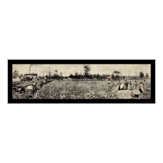 Cotton Picking Photo 1915 Poster