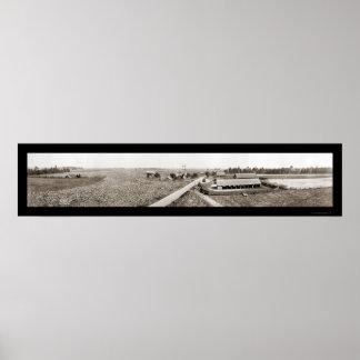 Cotton Plantation GA Photo 1917 Poster