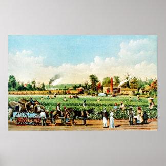 Cotton Plantation in Mississippi Print