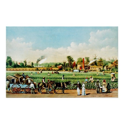 Cotton Plantation in Mississippi Poster