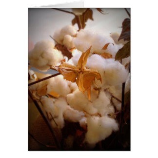 Cotton Stationery Note Card