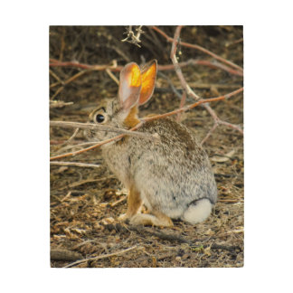 Cotton Tail Rabbit Wood Wall Art by Snap Daddy