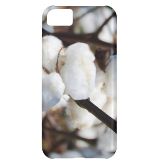 Cotton  the flower for 2nd anniversary iPhone 5C cases