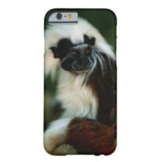 Cotton top tamarin (Saguinus oedipus) sitting, Barely There iPhone 6 Case