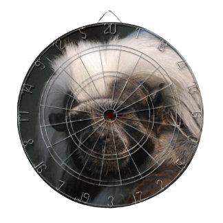 cotton-topped-tamarin-17.jpg dartboard with darts