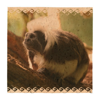 Cotton Topped Tamarin Monkey Drink Coasters