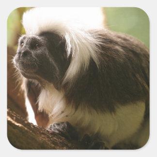 Cotton Topped Tamarin Monkey Square Sticker