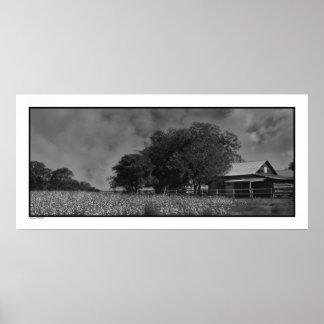 Cottonfield & Barn Poster Print