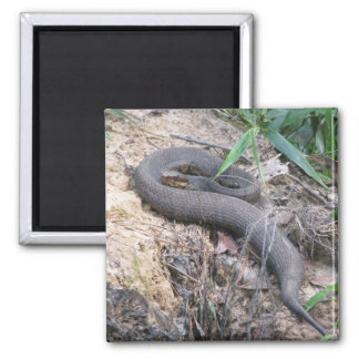 Cottonmouth Snake Basking Magnet