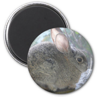 cottontail rabbit 2 inch round magnet