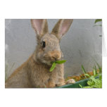 Cottontail Rabbit Greeting Card