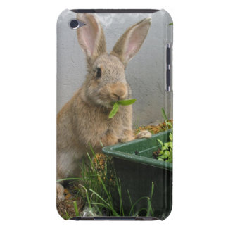 Cottontail Rabbit iTouch Case