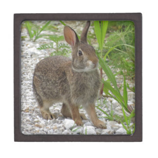 Cottontail Rabbit Keepsake Box