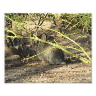 Cottontail Rabbit Art Photo