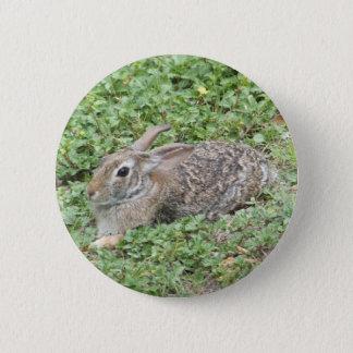 Cottontail rabbit pinback button