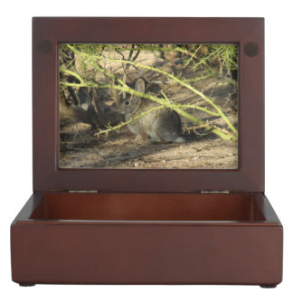 Cottontail Rabbit Keepsake Boxes