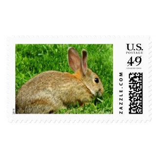 Cottontail Rabbit Postage
