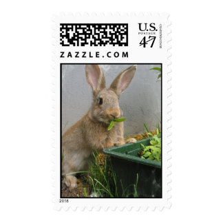 Cottontail Rabbit Postage Stamp