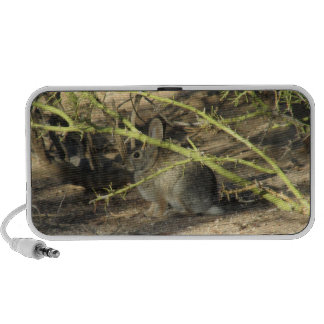 Cottontail Rabbit Speaker