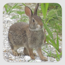 Cottontail Rabbit Square Sticker