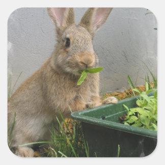 Cottontail Rabbit Stickers