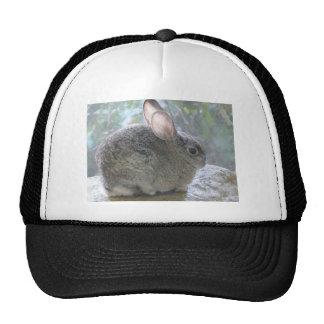 cottontail rabbit trucker hat