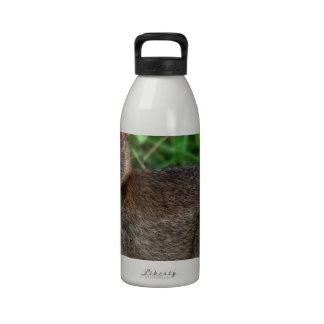 Cottontail Rabbit Reusable Water Bottles