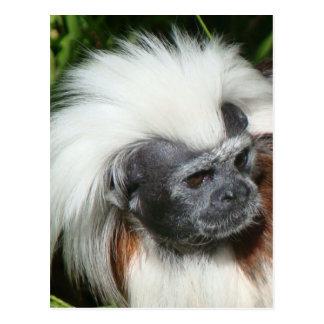 Cottontop Tamarin Monkey (Close Up) Postcard