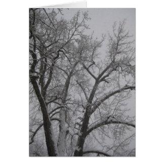 Cottonwood del invierno tarjeta de felicitación