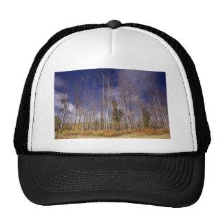 Cottonwood stand mesh hats