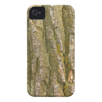 Cottonwood Tree Bark Texture iPhone 4 Cover