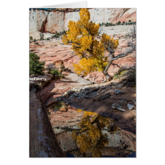 Cottonwood Tree In Fall Colors Greeting Cards