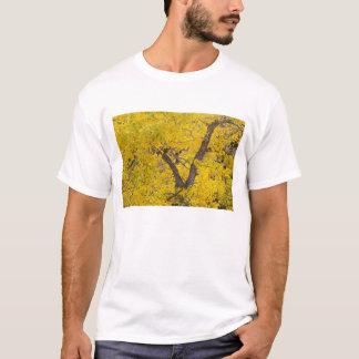 Cottonwood tree in peak fall colors in Glacier T-Shirt