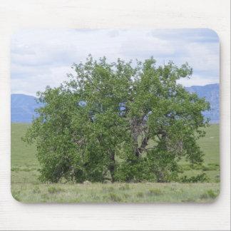 Cottonwood Tree in Summer Mousepad