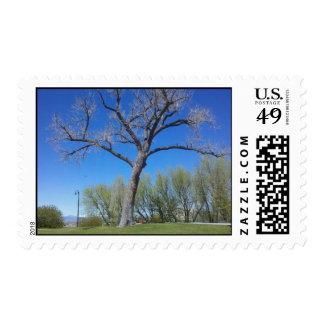 Cottonwood Tree Postage Stamp