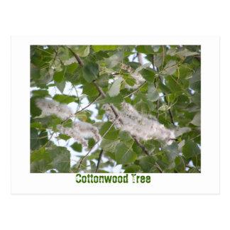 Cottonwood Tree Postcards