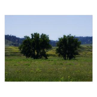 Cottonwood Trees Postcards