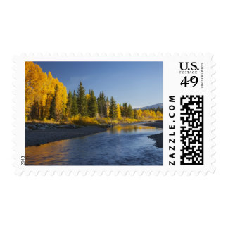 Cottonwood trees reflected in Pacific Creek Postage