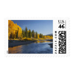 Cottonwood trees reflected in Pacific Creek Stamp