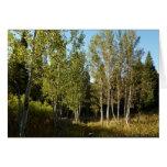 Cottonwoods Along Moose Ponds Trail Card