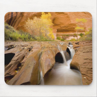 Cottonwoods in Autumn, Coyote Gulch, Glen Mouse Pad