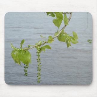 Cottonwoods on the Mississippi Mouse Pad